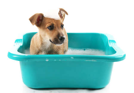 Puppy in bath isolated on white Stock Photo