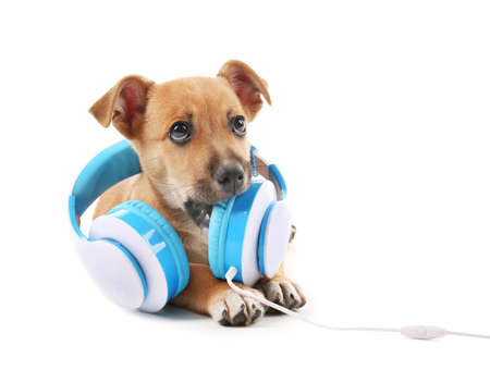 Filhote de cachorro brincando com fones de ouvido isolados no branco Foto de archivo