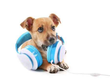 Filhote de cachorro brincando com fones de ouvido isolados no branco