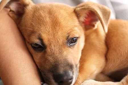 Woman holding puppy closeup