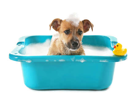 Puppy with toy duck in bath isolated on white Stock Photo