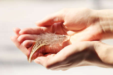 Hands holding a feather on white blurred background, close-up