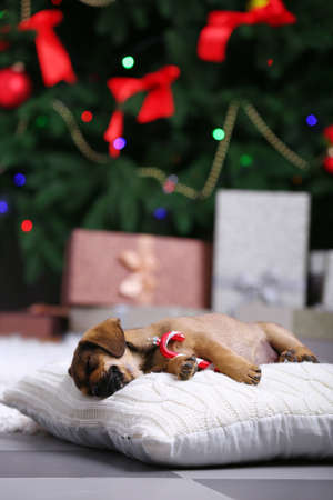 Cute puppy sleeping on pillow on Christmas background Stock Photo