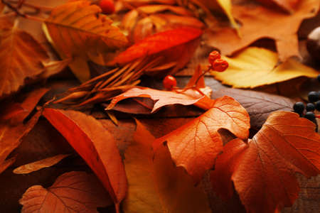 Colourful and bright fallen autumn leaves background