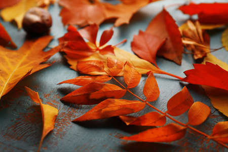 Colourful and bright fallen autumn leaves on blue wooden background