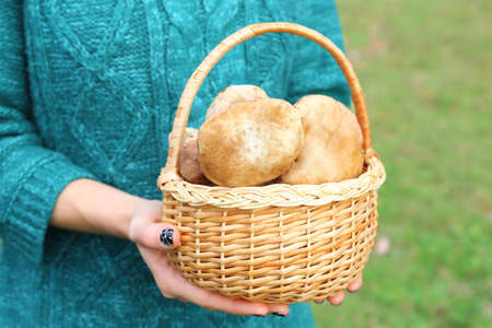 Woman holding basket of mushrooms Stock Photo