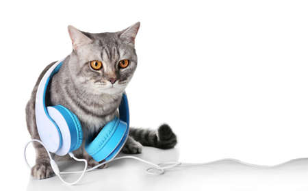 Grey cat with blue headphones isolated on white background Stock Photo