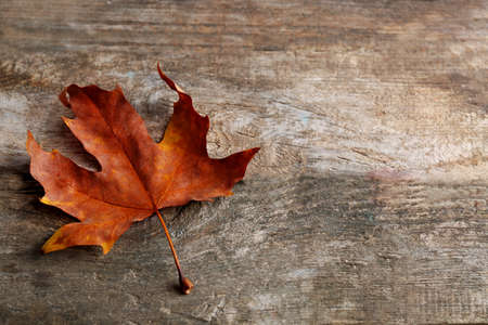 Dry maple leaf on wooden background