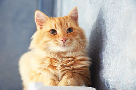 Fluffy red cat on warm radiator near grey wall, close up Stock Photo