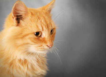 Portrait of adorable red cat, close up Stock Photo