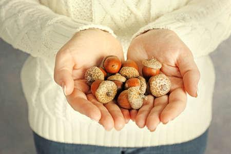 Pile of acorns in woman hands, closeup