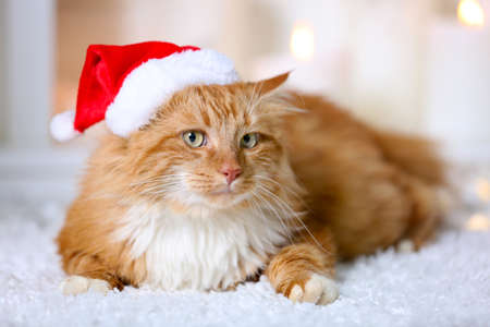 Fluffy red cat with Santa hat lying on a carpet
