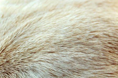 Labrador dogs fur, macro view