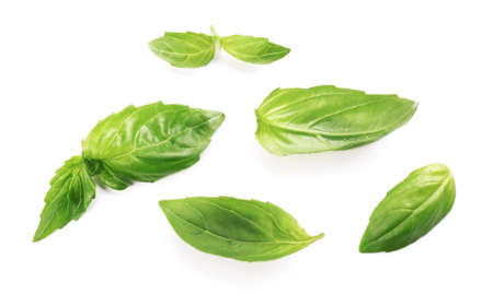 Fresh basis leaves isolated on white
