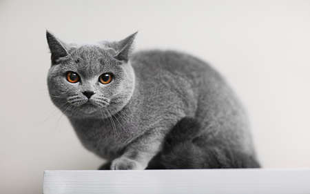 Cat lying on wooden shelf against blurred wall background Stock Photo