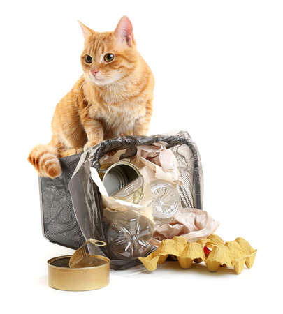 Red cat at full inverted garbage basket, isolated on white 版權商用圖片