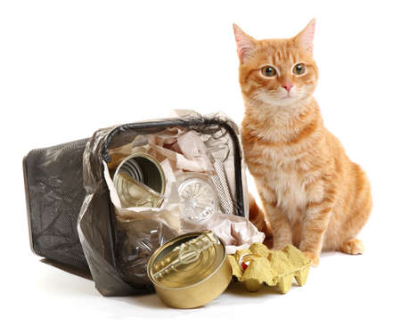 Red cat near full inverted garbage basket, isolated on white Stock Photo
