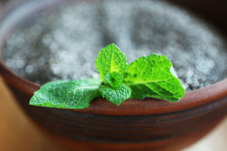 Bowl of chia seeds with mint leaves, closeup Stock Photo