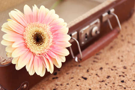 Pink gerbera on old suitcase over pin board