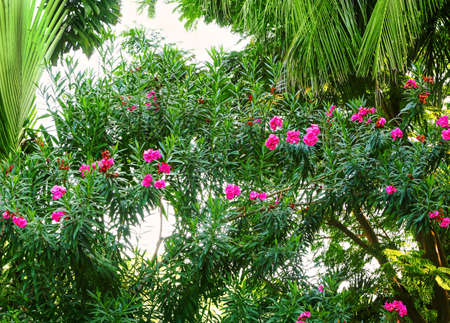 Tropical trees and flowers. Summer vacation concept.