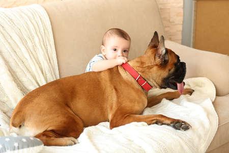 自宅のソファに横たわっているボクサー犬を持つ小さな男の子 写真素材 - 95971796