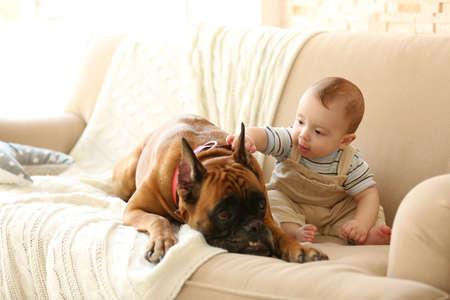 Piccolo neonato con cane boxer sdraiato su un divano a casa Archivio Fotografico - 95920519