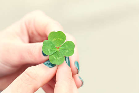 Four leaf clover in female hands closeup Stock Photo
