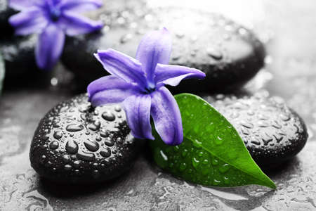 Heap of spa hot stones and flowers  on grey background