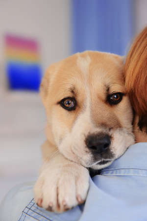 Woman holding Central Asian Shepherd puppy, closeup Stock Photo