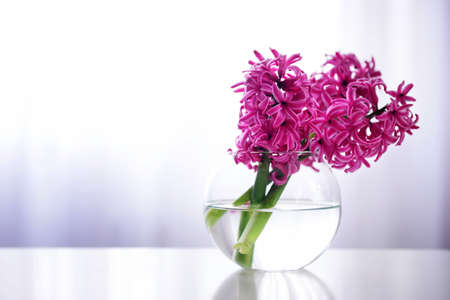 Hyacinth flowers on table in a vase Stock Photo