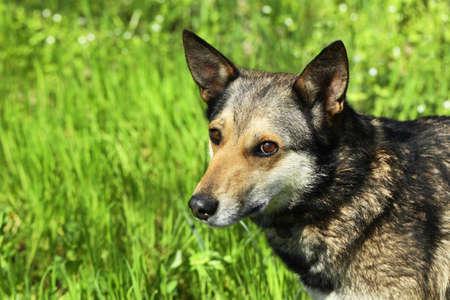 Dog in fresh green grass, close up