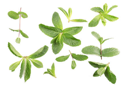 Fresh mint leaves pattern, top view Stock Photo