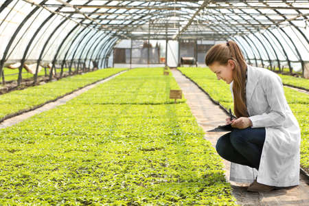 Female farmer working in large greenhouse Stock Photo
