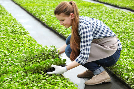 Female farmer working in large greenhouse Stock fotó