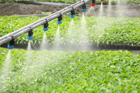 Greenhouse watering system in action Reklamní fotografie