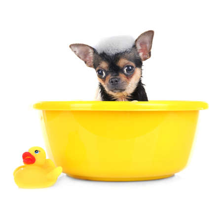 Puppy in bath isolated on white 스톡 콘텐츠