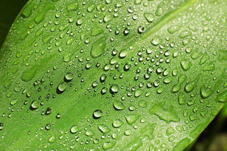 Green leaf with dew drops as background Archivio Fotografico