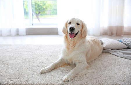 Cute dog on carpet