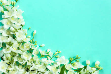 Fresh jasmine flowers  on color background