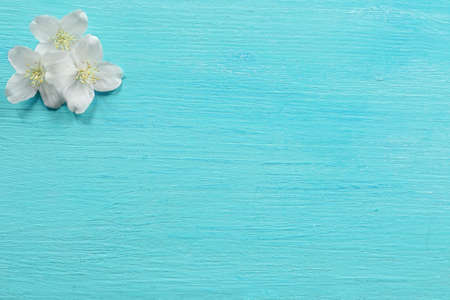Fresh jasmine flowers on wooden background