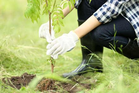 Woman planting tree in garden