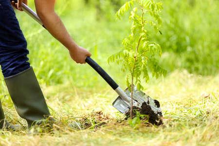 Man planting tree in garden