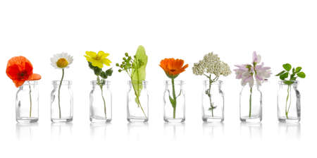 Different healing flowers in small glass bottles on white background Zdjęcie Seryjne