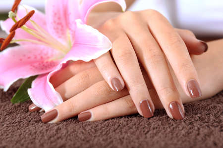 Female hands with brown manicure and pink lily, closeup Stock Photo