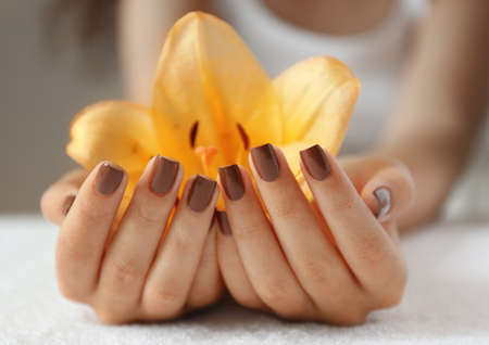 Female hands with brown manicure holding yellow lily, closeup