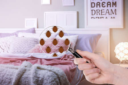 Woman with magnifying glass detecting bed bugs in bedroom Zdjęcie Seryjne