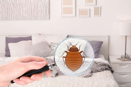 Woman with magnifying glass detecting bed bug in bedroom Фото со стока - 96050496
