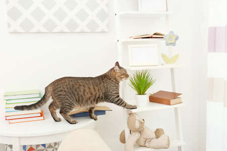 Curious tabby cat reaching stand near white wall Stock Photo