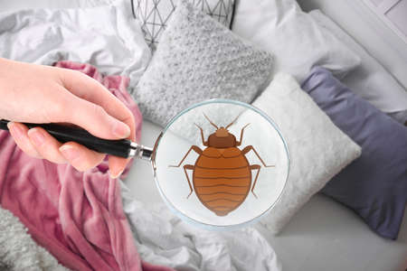 Woman with magnifying glass detecting bed bug in bedroom