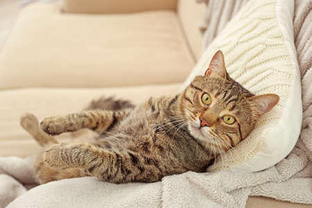 Grey tabby cat lying on knitted cushion and plaid Stock Photo